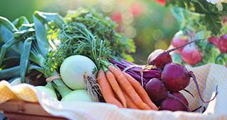 Osteopalma_Nutrition_Diet_Palma_Mallorca_service
